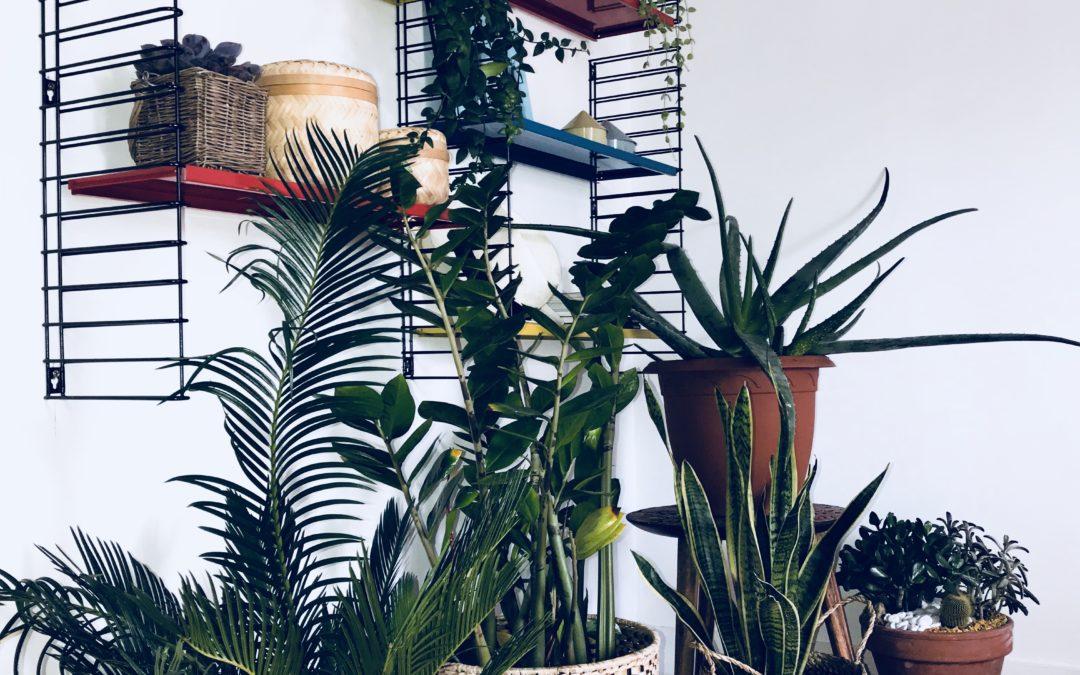 Mes plantes et moi….